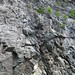 Calciocarbonatite dike (Firesand River Carbonatite Complex, Mesoproterozoic, 1.078 Ga; Wawa Lake East roadcut, northeast of Wawa, Ontario, Canada) 24