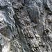 Calciocarbonatite dike (Firesand River Carbonatite Complex, Mesoproterozoic, 1.078 Ga; Wawa Lake East roadcut, northeast of Wawa, Ontario, Canada) 25