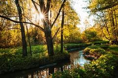 Stream in the forest (prokhorov.victor) Tags: лес ручей природа пейзаж деревья солнце утро отражение