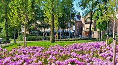 Langs de Lijn: langs het Oosterpark. (Peter ( phonepics only) Eijkman) Tags: amsterdam city combino gvb park tram transport trams tramtracks trolley rail rails strassenbahn streetcars nederland netherlands nederlandse noordholland holland