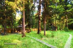 Country side, Russia (Phuketian.S) Tags: landscape nature country forest garden tree farm russia россия ландшафт природа участок сосна ель москва подмосковье phuketian travel лес деревья art sky