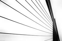 ... (fhenkemeyer) Tags: bridge lines bw minimalistic abstract erasmusbridge netherlands rotterdam
