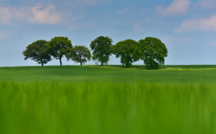 Surreal Land (creativegaz) Tags: sky surreal trees landscape light lowview view green grass field nikon nature n