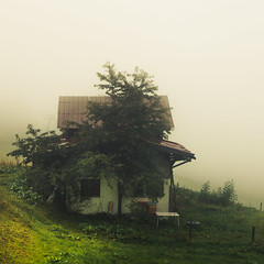 At the End of the World (Netsrak) Tags: kleinwalsertal baum tree at österreich mittelberg natur nature meadow wiese mist fog nebel