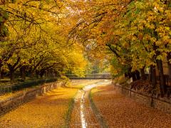 Autumn Colours (Joel Bramley) Tags: autumn fall leaves creek nature natural bendigo morning water landscape trees