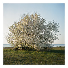 April 18 - Kodak Porta 800 exp* (magnus.joensson) Tags: sweden skåne beach sunset april rolleiflex 35 zeiss tessar 75mm kodak porta 800 exp c41 6x6 medium format