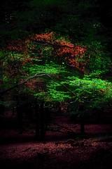 In the forest - Im Wald (b_kohnert) Tags: wood light licht landscape grün green forest farben colors baum wald natur landschaft kreisgrosgerau hessen germany bäume