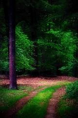 In the forest - Im Wald (b_kohnert) Tags: bäume germany hessen kreisgrosgerau landschaft natur wald baum colors farben forest green grün landscape licht light wood