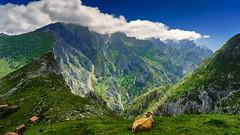 La majada de Ostón (Carpetovetón) Tags: picosdeeuropa culiembro canaldeculiembro montaña sonya6000 ostón majadadeostón vacas macizocentral asturias españa paisaje