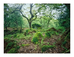 Transition 1 (gerainte1) Tags: pinhole portra400 film colour woodland trees yorkshire