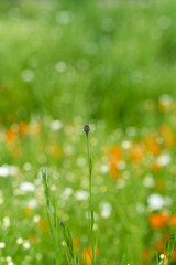 Bud (tonybill) Tags: flowers gardens may miscellaneous rhs rhswisley sonya7riii sonyfe85mmf14gm surrey wisley bokeh
