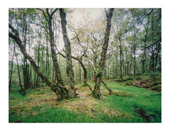Transitions 3 (gerainte1) Tags: pinhole portra400 film colour woodland trees spring