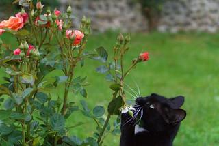 chat au jardin4