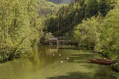 A small stream in Lower Austria (a7m2) Tags: kernhof keerbach loweraustria lilienfeld natur bach staegydamneuwalde gscheids gutenstein travel wandern wald