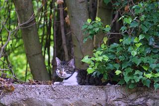 chat au jardin2