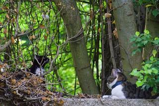 chat au jardin1