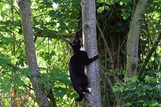 chat au jardin5