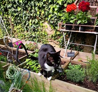 chat au jardin8