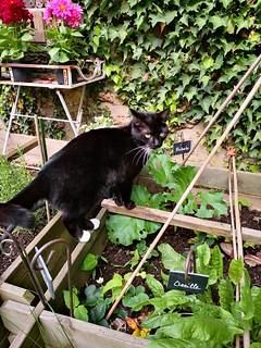 chat au jardin6