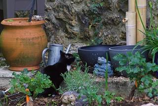 chat au jardin3