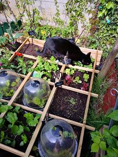 chat au jardin7