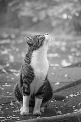 See The Light (sdupimages) Tags: mbt hmbt blackwhite noirblanc noiretblanc chat cat pet monochrome light effect photoshop bw nb animal