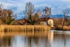 Doux Reflets (Savoie 01/2019) (gerardcarron) Tags: arbres canon80d ciel cloud lacstandré landscape nature paysage savoie water