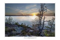 Sunset an at old pine (pellepersson) Tags: sunset canon5d pellepersson tree sweden bohuslän