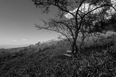 A bench where it was a view point (kovmakity) Tags: sony dscrx100m6 nagano 長野県 蓼科