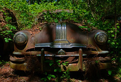 Overgrown (davidwilliamreed) Tags: old rusty crusty metal pontiac car auto automobile rust decay patina abandoned neglected forgotten weathered weatherbeaten oxidized oxidation oldcarcity whitega bartowcounty