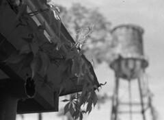 Old Post Office (PositiveAboutNegatives) Tags: leica slr leicaflexsl oldcamera leitz leicar 50mm 50mmsummicron yellowfilter film analog bw blackandwhitefilm foma fomapan fomapan100 rodinal coolscan watertower postoffice florida bokeh