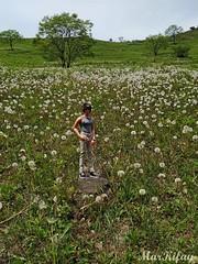 6-IMG_20190525_124738 (MarKifay) Tags: handmade plants nature doll bjd recast boy nakhodka city flowers