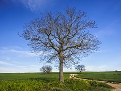 trees (enekopy) Tags: