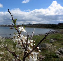 bua (helena.e) Tags: helenae husbil rv motorhome älsa bua water vatten moln cloud himmel sky flower blomma vit white green grön blue blå