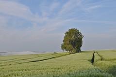 """Im Morgenlicht mit Nebel im Tal über der Haune (Uli He - Fotofee) Tags: ulrike """"ulrike he"""" uli """"uli hergert"""" hergert nikon """"nikon d90"""" fotofee fotografie hobbie meinweg morgenspaziergang abendspaziergang morgenlicht abendlicht morgennebel nebel haune rhönblick beimirzuhause"""