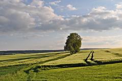 """Im Abendlicht der tiefstehenden Sonne (Uli He - Fotofee) Tags: ulrike """"ulrike he"""" uli """"uli hergert"""" hergert nikon """"nikon d90"""" fotofee fotografie hobbie meinweg morgenspaziergang abendspaziergang morgenlicht abendlicht morgennebel nebel haune rhönblick beimirzuhause"""