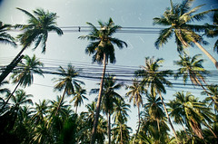 I n d i g e s t i o n i n p a r a d i s e (Zew1920) Tags: thailand paradise palm wires electricity color analog photography canon ae1 trip vacation indigestion