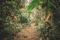 Trail - Sage Mountain National Park - Tortola (Lee Edwin Coursey) Tags: instagram ifttt travel caribbean windjammer 2019 islandwindjammers leeco leecoursey