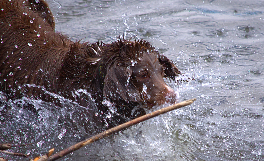 The World's Best Photos of dog and stick - Flickr Hive Mind