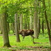Wildpark-Schweinfurt_e-m10_1014277913