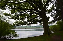 138 Agden (Conanetta) Tags: agden reservoir yorkshire sheffield reflection water tree landscape