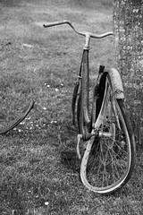 Nostalgie cyclique... (Tonton Gilles) Tags: noir et blanc vélo vélocipède bicyle bicyclette petite reine roue voilée carcasse arbre tronc repêchage détail urbain