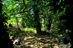 The woods of Palladion. (Elias Chris) Tags: palladio arcadia arkadia arcadiagreece greece woods myth trees