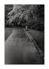 Rainy day in the park (K.Pihl) Tags: olympusom1 trees denamrk rainyday monochrome schwarzweiss blackwhite zuiko50mmf14 film pellicolaanalogica park bw kodaktmax400 analog path