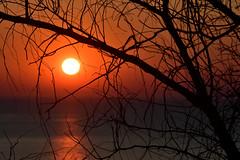 Alba Civitanovese (luporosso) Tags: natura nature naturaleza naturalmente nikon nikond500 nikonclubit imdifferent nikonitalia alba sunrise mare sea sole sun alberi silhouette siluetas