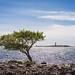 Landmark tree