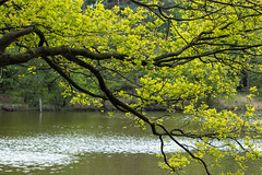 Spring leaves (Photography by Martijn Aalbers) Tags: oisterwijksebossen forest bos natuur nature spring lente mei may noordbrabant the netherlands nederland canoneos77d ef70200mmf4lisusm wwwgevoeligeplatennl