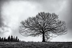 Some Months ago... (Ody on the mount) Tags: anlässe bäume em5ii fototour hdr himmel mzuiko2518 omd olympus pflanzen schwäbischealb silhouette wolken bw blackandwhite clouds monochrome sw schwarzweis sky trees metzingen badenwürttemberg deutschland