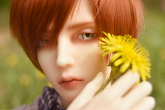 Flower Boy (flameonchoi) Tags: bjd ringdoll sol merlin flower yellow red love spring kpop japanese anime korean chinese