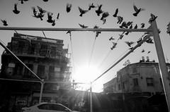 Birds_Telaviv_by_Victor_Bezrukov (Victor Bezrukov) Tags: blackandwhite ricoh ricohgrii telaviv victorbezrukov lifephotography photography streetlife streetphotography ויקטורבזרוקוב